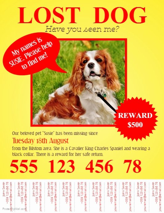 Missing Pet Poster Template Elegant Lost Pet Flyer Template with Tabs