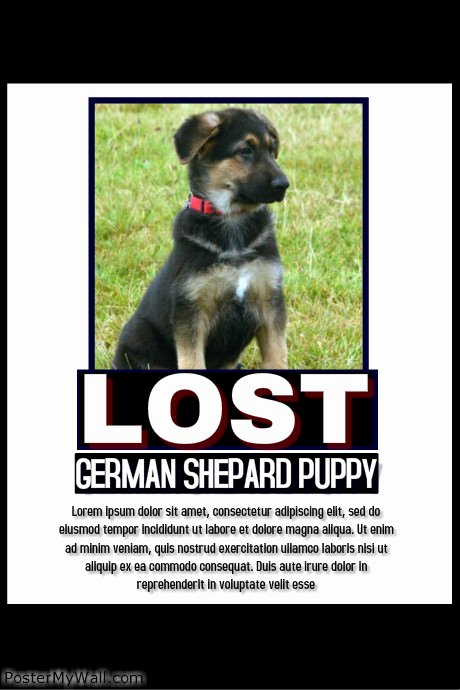 Missing Pet Poster Template New Lost Pet Template