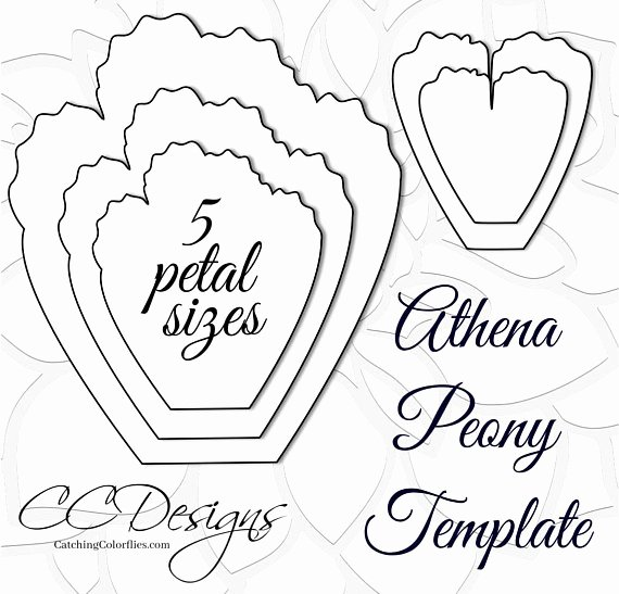 Paper Flower Template Printable Unique Giant Paper Peonies Printable Pdf Flower Templates Peony Pdf