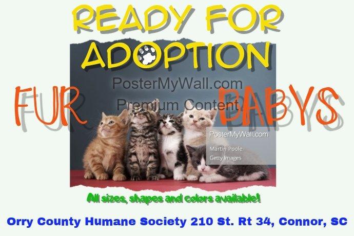 Pet Adoption Flyer Template Beautiful Pet Adoption Template