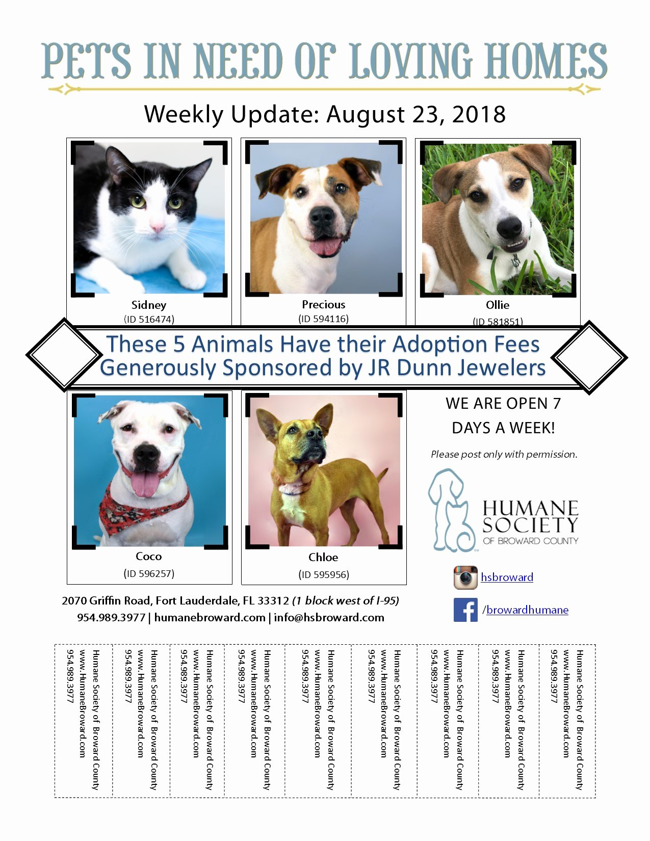 Pet Adoption Flyer Template Beautiful Weekly Pet Flyer August 23 2018 Humane society Of