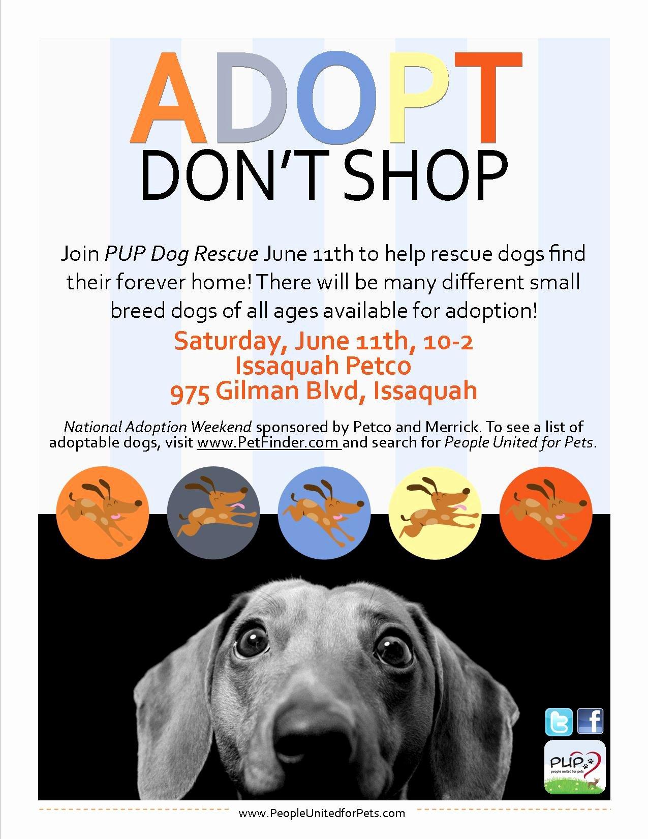 Pet Adoption Flyer Template Elegant Pup Dog Rescue Flyers – Portfolio Michelle Fears