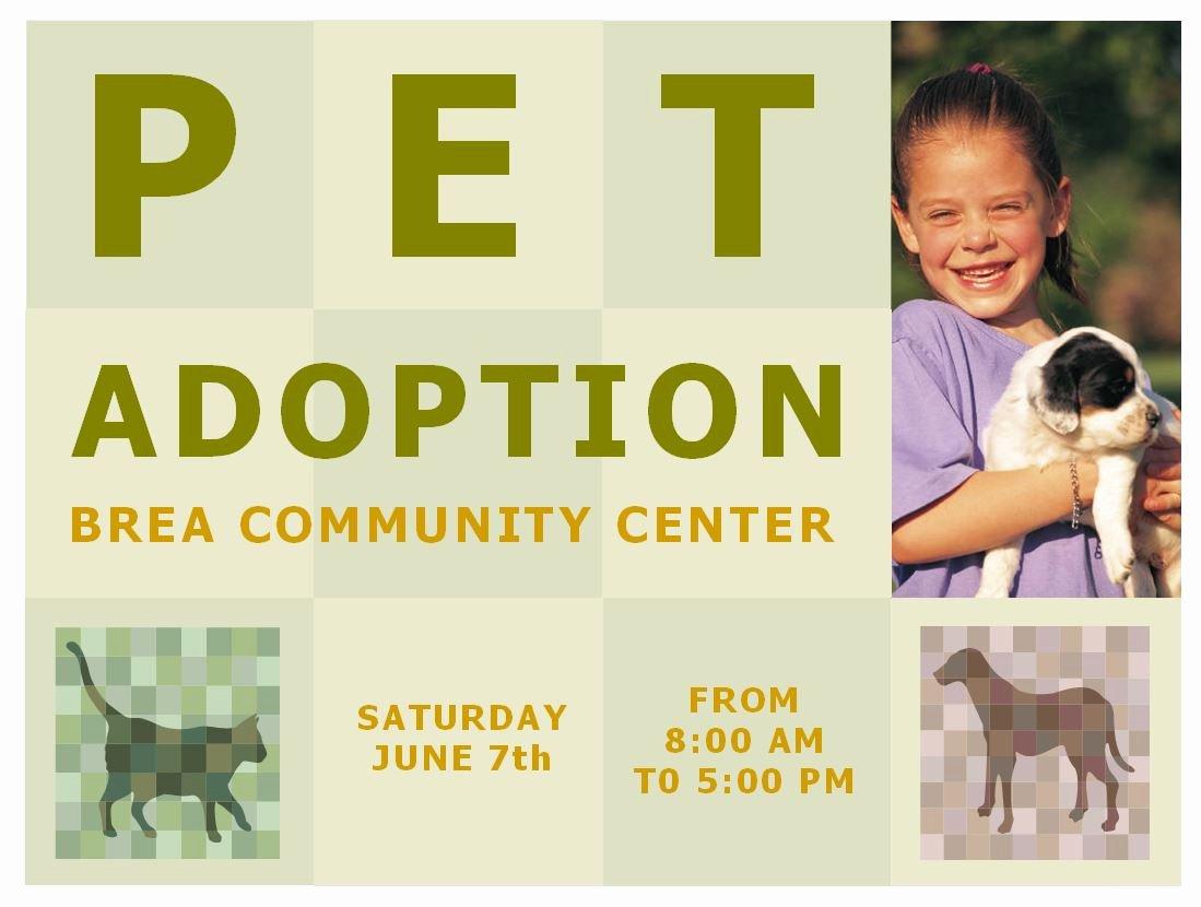 Pet Adoption Flyer Template Fresh Pet Adoption Template