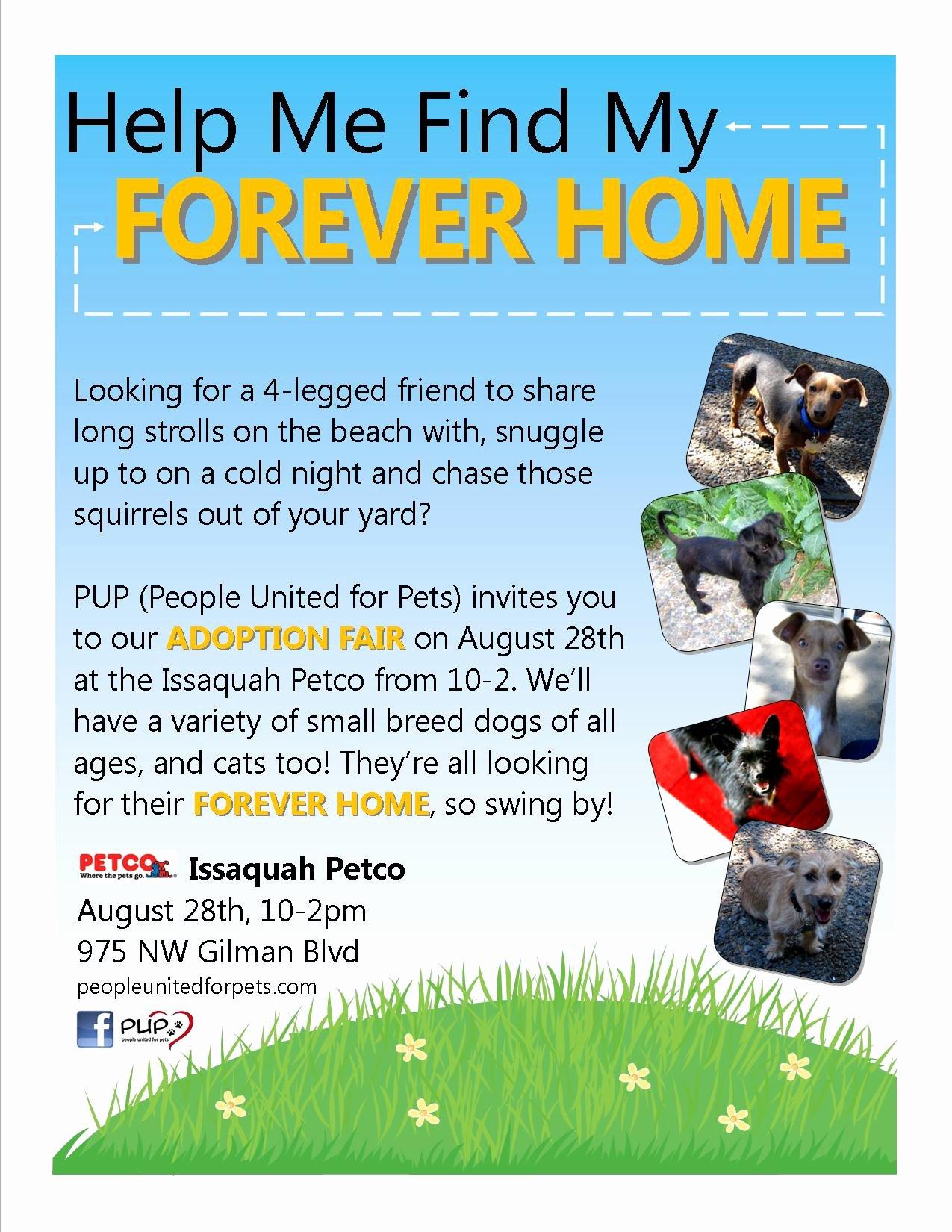 Pet Adoption Flyer Template Fresh Pup Dog Rescue Flyers – Portfolio Michelle Fears