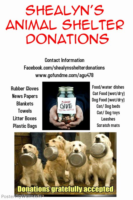 Pet Adoption Flyer Template Inspirational Animal Shelter Donations Template