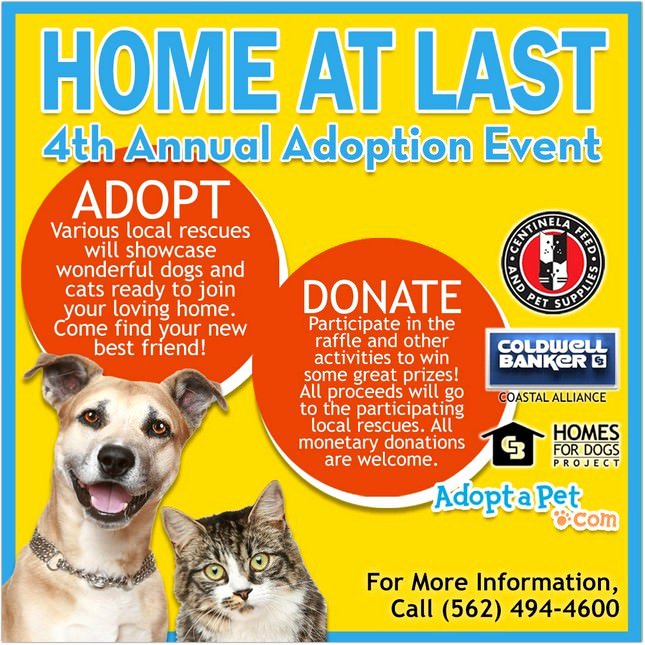 Pet Adoption Flyer Template New 15 Best Adoption Flyer Designs & Templates 2018 Templatefor