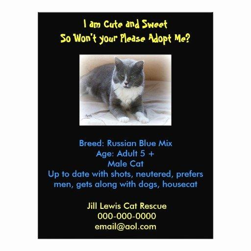 Pet Adoption Flyer Template Unique Cat Adoption Template Flyer