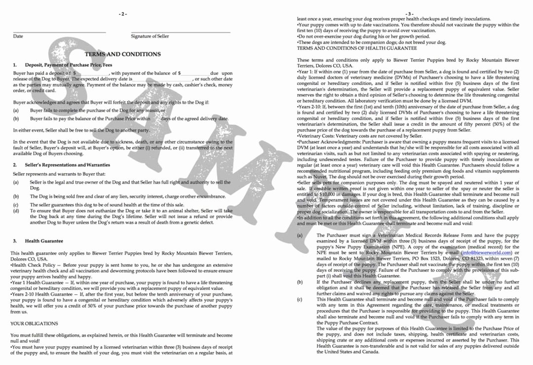 Puppy Health Guarantee Template Unique Puppy Contract for A Rocky Mountain Biewer Terrier