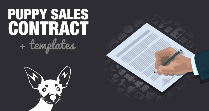 Puppy Sale Contract Template New Free Puppy Sales Contract Template & Word Doc Sample