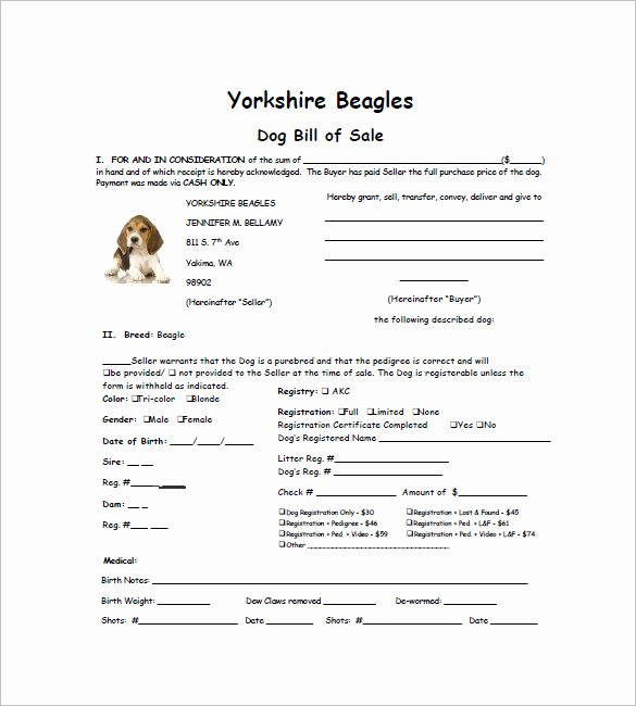Puppy Sales Contract Template Lovely Dog Bill Of Sale – 8 Free Sample Example format