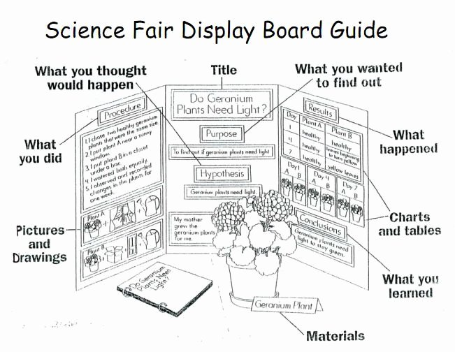 Science Fair Project Template New 1000 Images About 1st Grade Science Fair Projects On