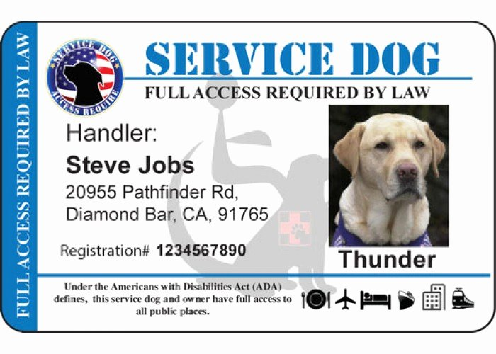 personalize service horizontal handicap background dog id card 4