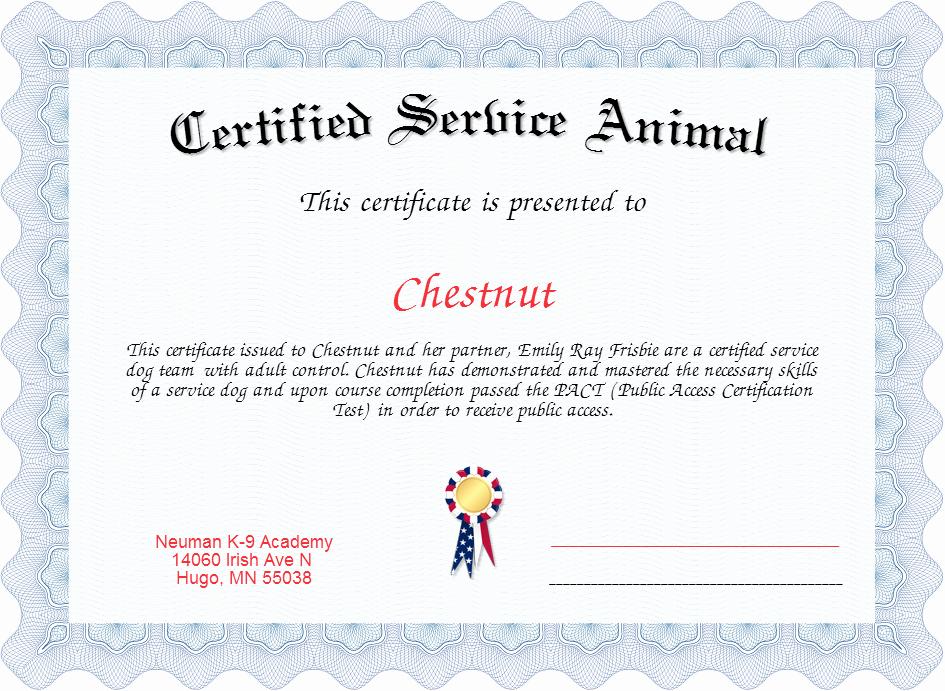Service Dog Certificate Template Beautiful Certified Service Animal Certificate