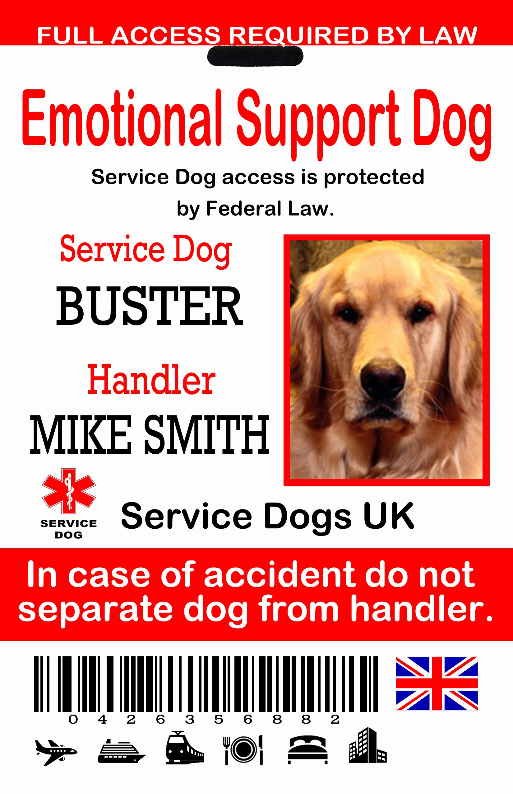 Service Dog Certificate Template Best Of Uk Service Dog Id Tags the Sewing Network
