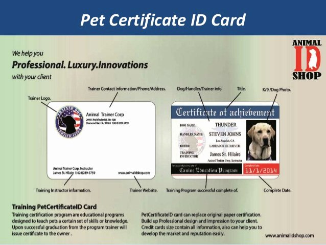 Service Dog Certificate Template Inspirational What is Service Dog Id and why You Need Service Dog Id