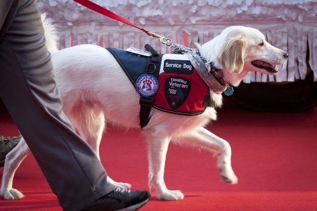 Service Dog Certificate Template Lovely the Power Of Pets