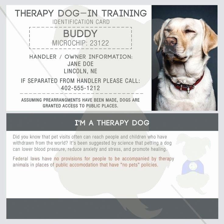 Service Dog Certificate Template Luxury Dog Breed Certificate Template – Altpaper