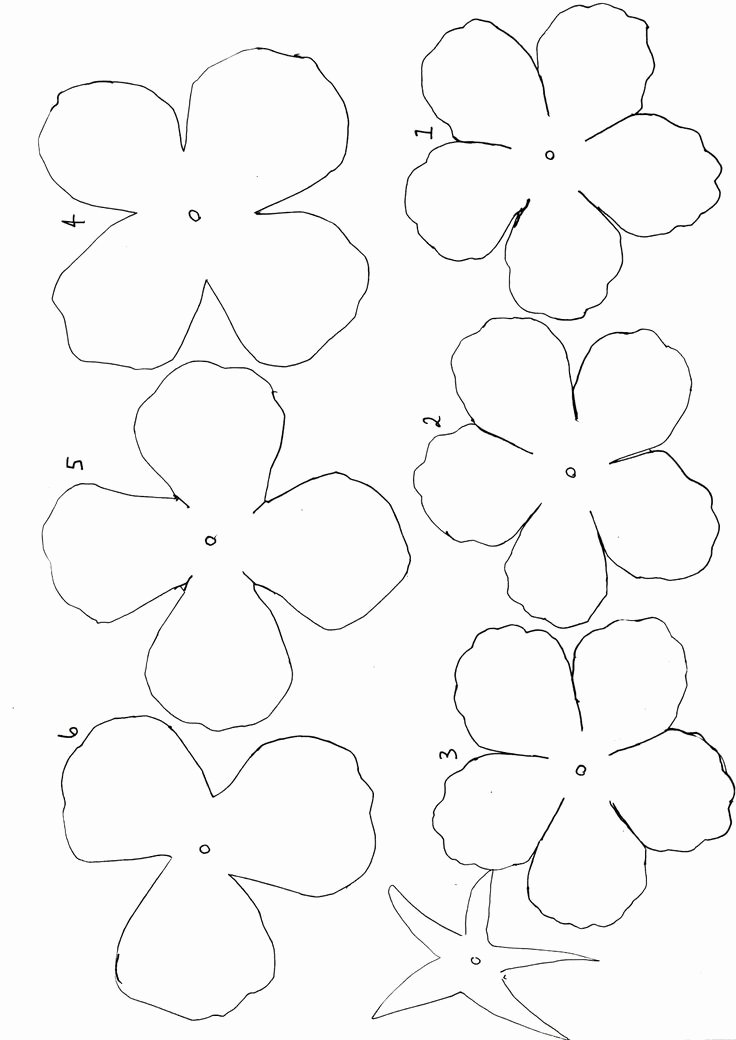 Template for Paper Flowers Unique Best 25 Flower Template Ideas On Pinterest