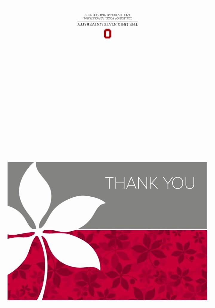 Thank You Postcard Template Elegant Thank You Card Templates