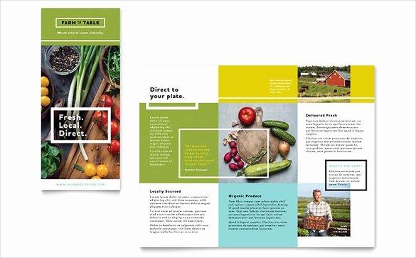 brochure template word
