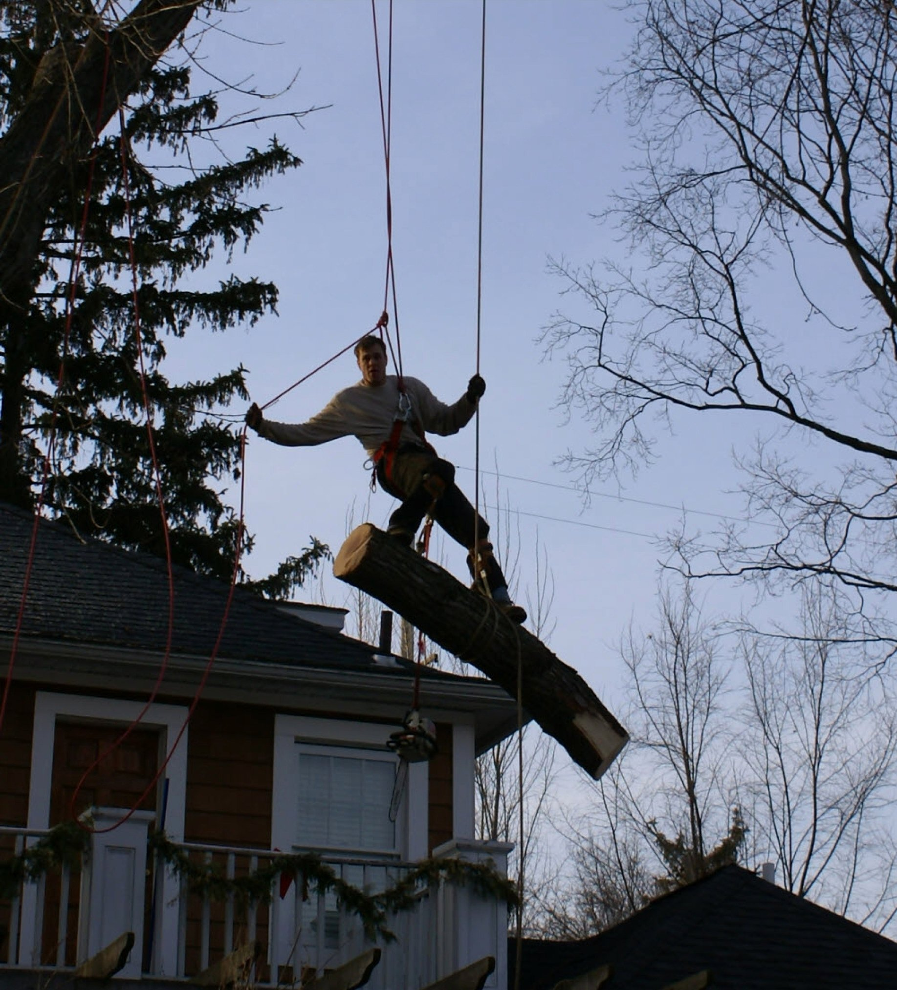 Tree Service Estimate Template Elegant Royal Oak Michigan Tree Service